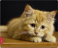 Speed-Link SL-6242-CAT Mauspad (Mehrfarbig)