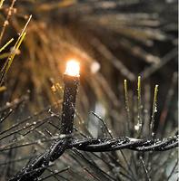 Konstsmide 3611-800 Dekorative Beleuchtung (Schwarz)