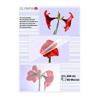 Olympia 1x50 DIN A3 80 micron (Transparent)